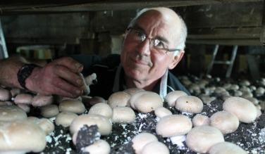 Clive Thompson, Parkvale Mushrooms [photo Caleb Harris]